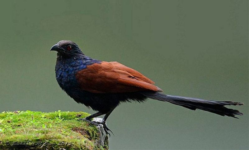 Chủ mơ bắt gặp hình ảnh loài chim này sẽ mang đến niềm vui, hạnh phúc cho bạn và gia đình